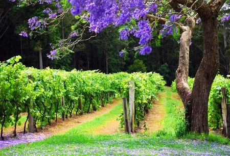 Bago Vineyards - Accommodation Gladstone