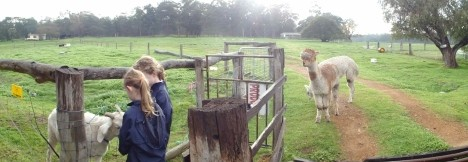 Boronia Farm Farmstay - Accommodation Gladstone