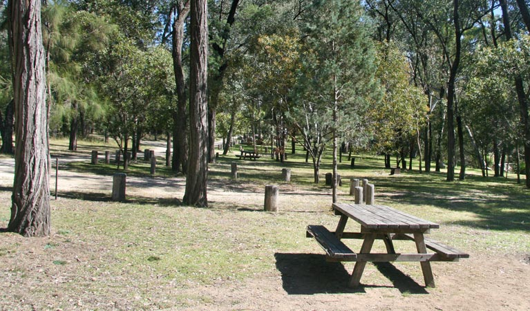 Lemon Tree Flat campground - Accommodation Gladstone