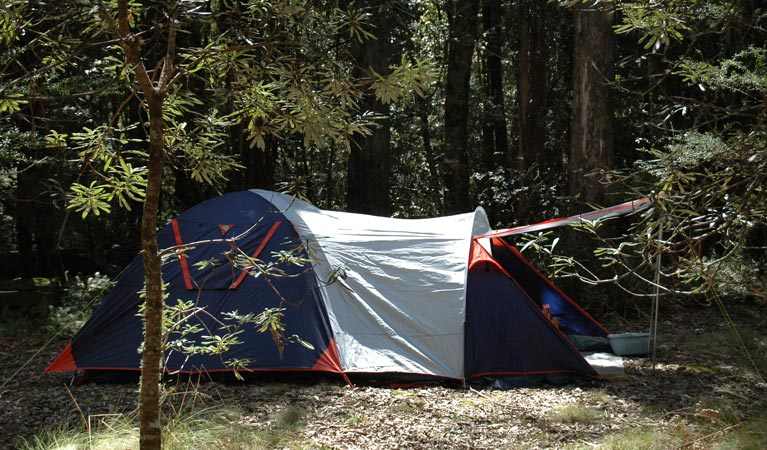 Thungutti campground - Accommodation Gladstone