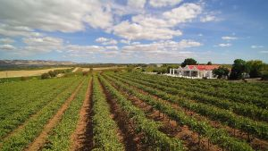 1837 Barossa Luxury Vineyard Cottages - Accommodation Gladstone