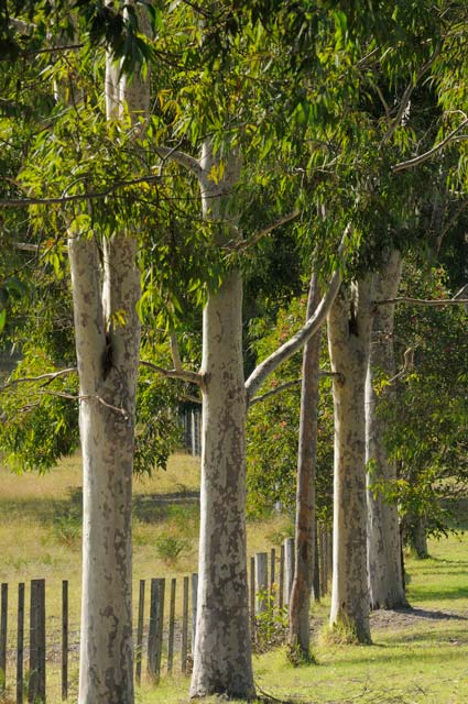 Stringybark Cottages - Accommodation Gladstone