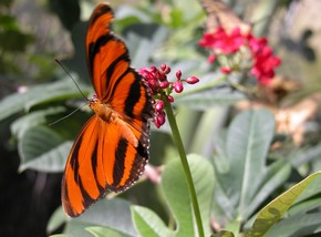 Butterfly Farm - Accommodation Gladstone