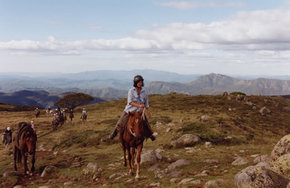 High Country Horses - Accommodation Gladstone