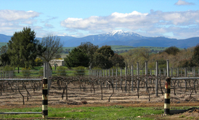 Buller View Wines - Accommodation Gladstone