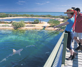 Shark Bay Marine Park - Accommodation Gladstone