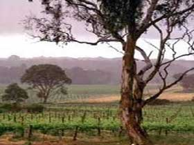Yangarra Estate Vineyard - Accommodation Gladstone