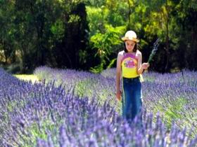 Brayfield Park Lavender Farm - Accommodation Gladstone