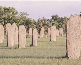 Magnetic Termite Mounds - Accommodation Gladstone