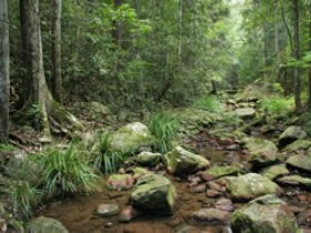 Amamoor State Forest - Accommodation Gladstone