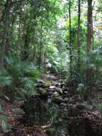 Mossman Gorge Rainforest Circuit Track Daintree National Park - Accommodation Gladstone