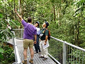 Daintree Discovery Centre - Accommodation Gladstone