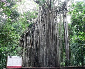 Curtain Fig National Park - Accommodation Gladstone