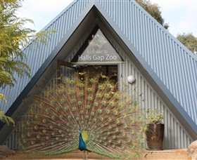 Halls Gap Zoo - Accommodation Gladstone
