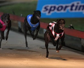 Dapto Dogs - Accommodation Gladstone