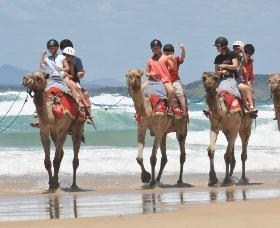 Camel Rides with Coffs Coast Camels - Accommodation Gladstone