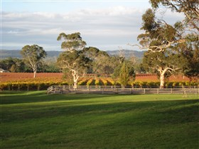 Top Note Vineyard - Accommodation Gladstone