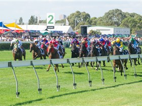 Morphettville Racecourse - Accommodation Gladstone