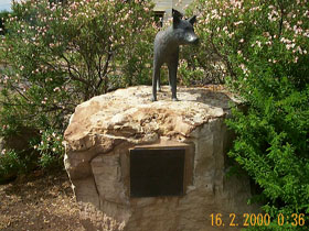 Dingo Statue - Accommodation Gladstone