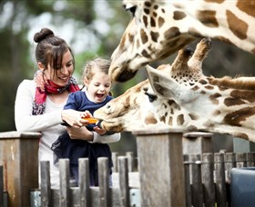 Taronga Western Plains Zoo Dubbo - Accommodation Gladstone
