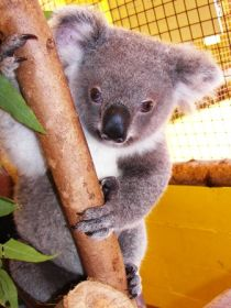 Cooberrie Park Wildlife Sanctuary - Accommodation Gladstone