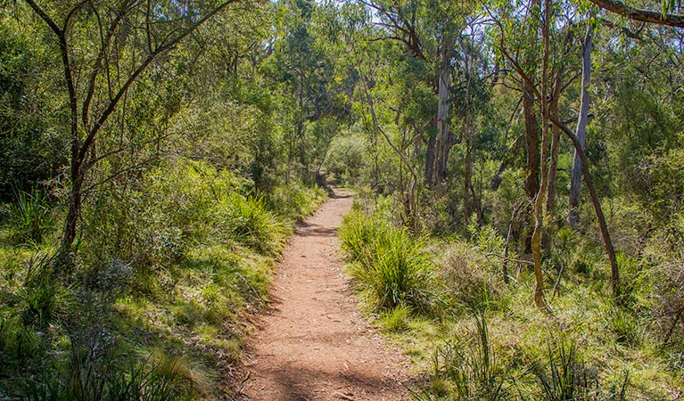 Mares Forest Creek walking track - Accommodation Gladstone