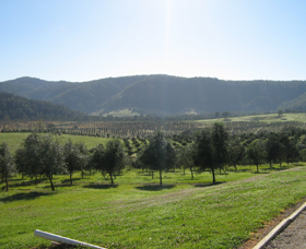 Hastings Valley Olives - Accommodation Gladstone