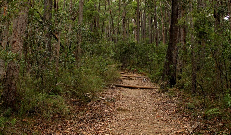 Pigeon House Mountain Didthul walking track - Accommodation Gladstone