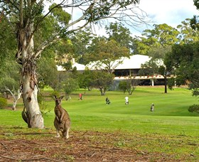 Pambula Merimbula Golf Club - Accommodation Gladstone