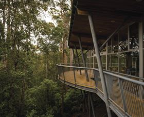 Tarkine Forest Adventures - Dismal Swamp - Accommodation Gladstone