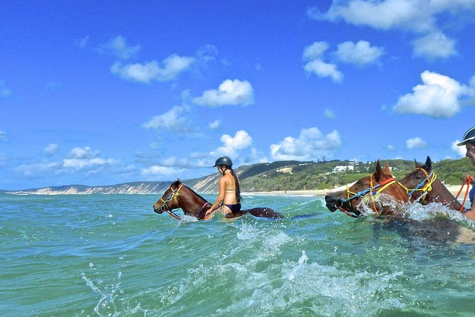 Horse Swimming Ride from Rainbow Beach - Accommodation Gladstone