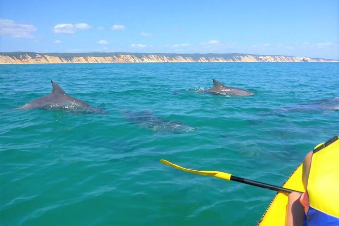 Half-Day Kayak with Dolphins and 4WD Beach Drive from Rainbow Beach - Accommodation Gladstone