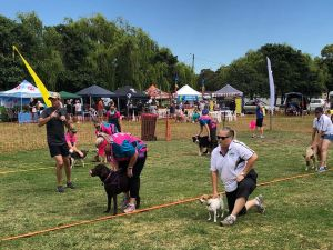 Dogs in the Park Orange - Accommodation Gladstone