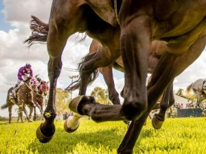 Night Markets and Race Day - Accommodation Gladstone