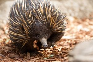 Aussie Wildlife Course - July/August/September - Accommodation Gladstone