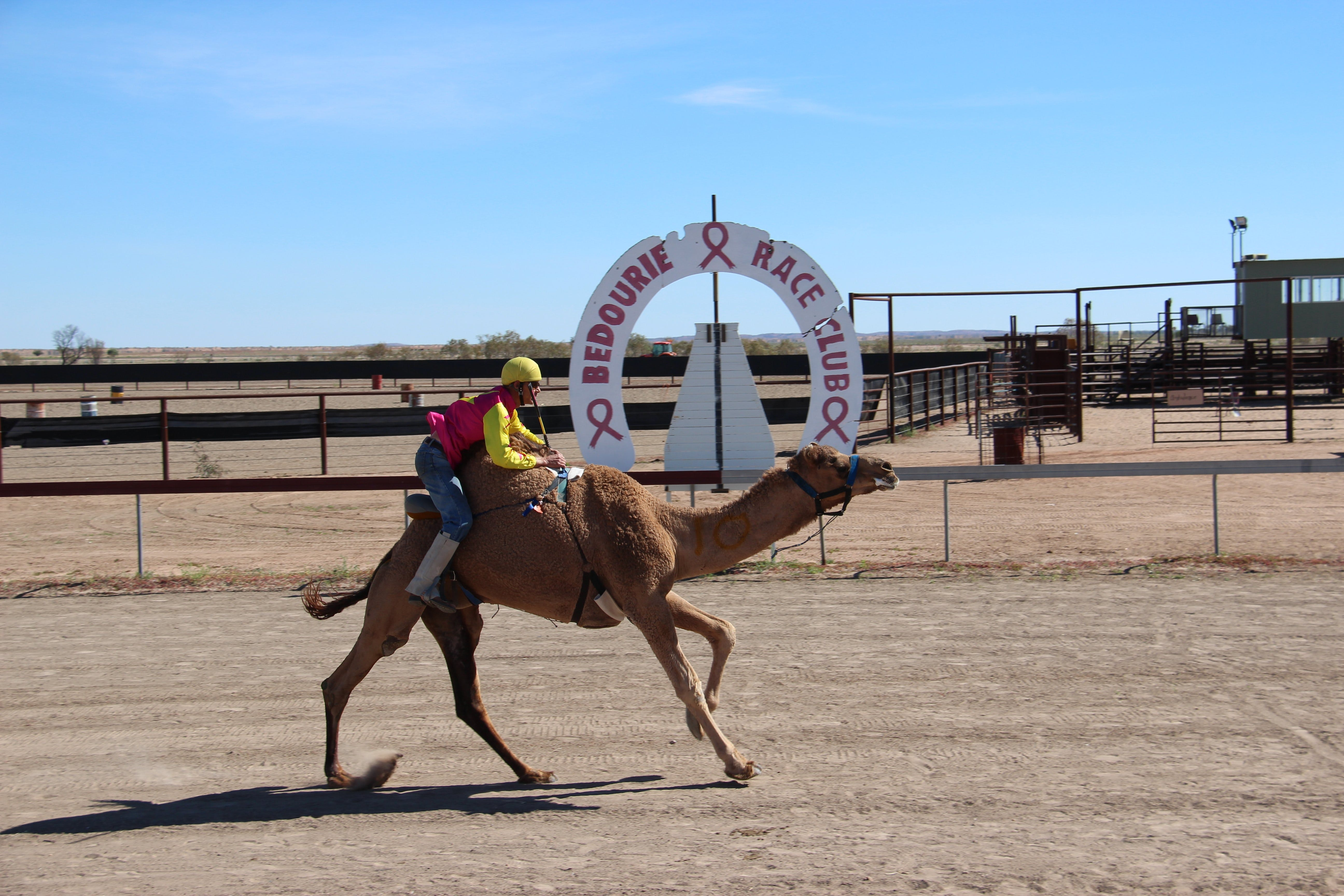Bedourie Camel and Pig Races and Camp oven Cook-off - Accommodation Gladstone