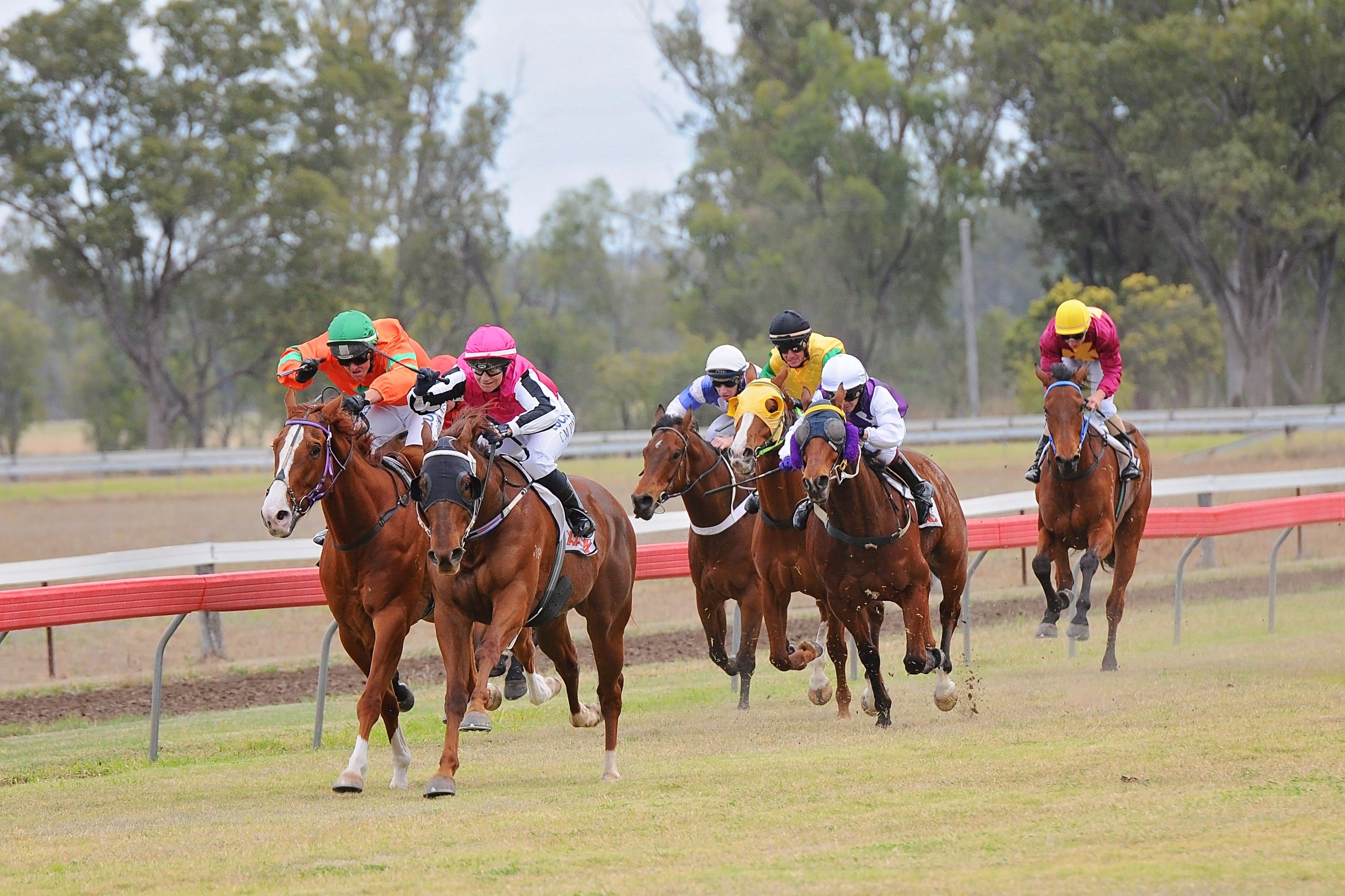 Thangool Races - Accommodation Gladstone