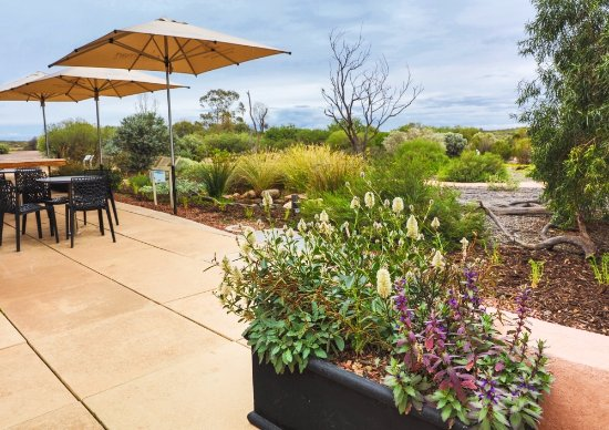Arid Lands Botanic Garden Cafe - Accommodation Gladstone